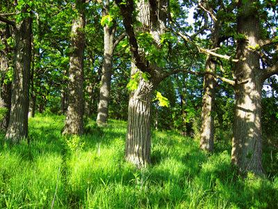 Folsom+Nature+Preserve