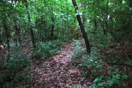 Wick+Nature+Preserve
